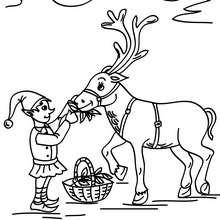 Desenhos dos ajudantes do papai Noel dando de comer para as Renas