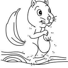 Jogo de ligar os pontos - Esquilo