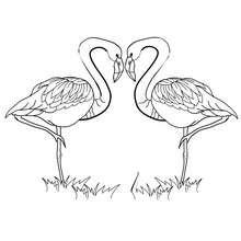 Desenho de um casal de cisnes para colorir
