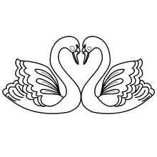 Desenho de um par de cisnes  para colorir
