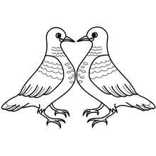 Desenho de um casal de pombos no dia dos namorados para colorir