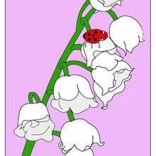 JOANINHA em uma flor