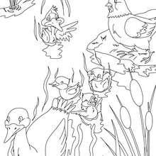 Desenho do conto do Patinho Feio para colorir