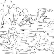Desenho para colorir do conto do Patinho Feio
