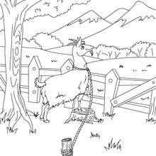 Desenho da Cabra do Monsieur Seguin para colorir