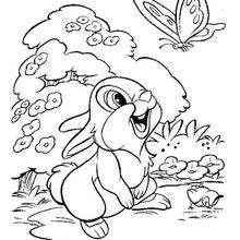 O Tambor com uma borboleta