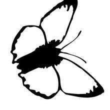 Desenho de uma Borboleta preta e branca para colorir