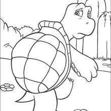 Verne, a tartaruga