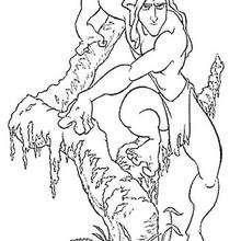 Tarzan descendo da árvore