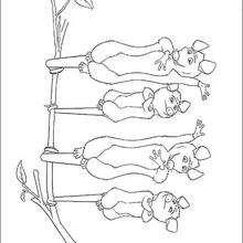 Família de gambás