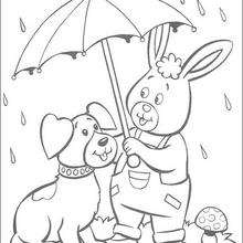 O coelho e Turbulento na chuva