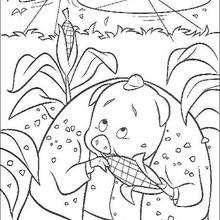 O porco comendo milho escondido