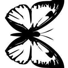 Borboleta preta e branca