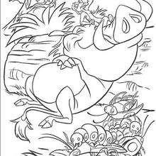 Timon comendo besouros