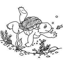Desenho do Franklin nadando para colorir
