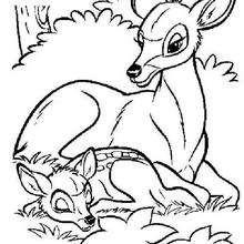 Bambi dormindo