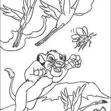 Simba caçando besouros