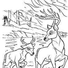 Bambi atravessando o rio