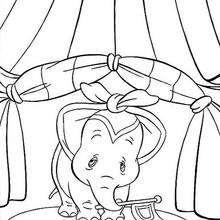 O show do Dumbo