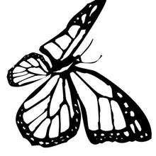 Colorir folha com Borboleta-monarca