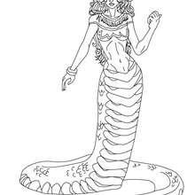 Desenho da EQUIDNA para colorir