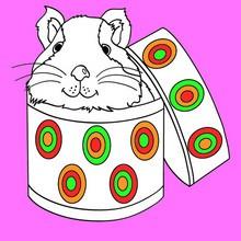 animal, Desenhos de ANIMAIS DE ESTIMAÇÃO para colorir