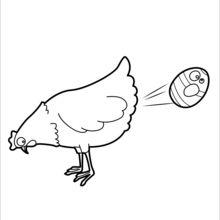 Poule05