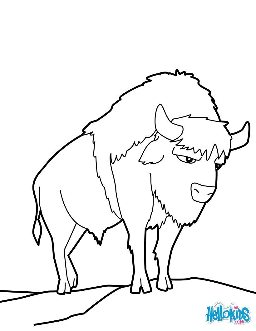 desenhos para colorir de bisão de planície