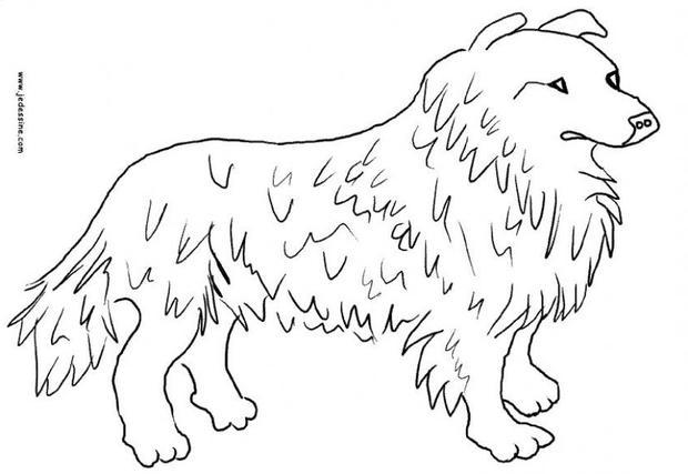 Desenhos para colorir de desenho da collie para colorir for Border collie coloring pages