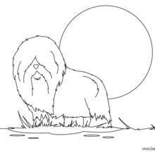 Desenho de um Pastor ingês para colorir