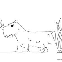 Desenho de um Terrier para colorir