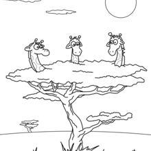 Girafas em uma árvore