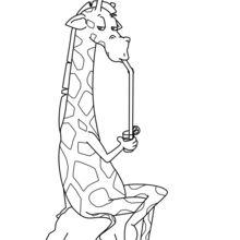 Giraffe beber um cocktail