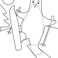 Pinguim esqui