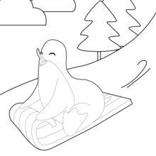 Pinguim que faz do trenó