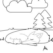 Raposa sonolenta