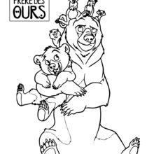 Irmão Urso Pets