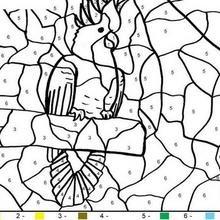 Colorindo o papagaio pelos números