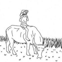 Flautista em um búfalo no Vietnã