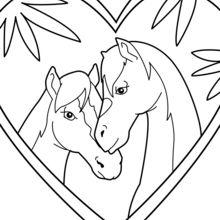 Casal de cavalos