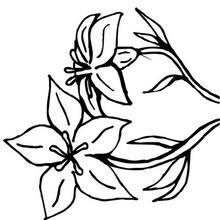 Desenhos Para Colorir De Desenho De Um Ramo De Flores Para Colorir