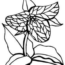 Desenho de uma Flor Carnívora para colorir