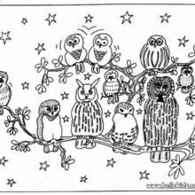Desenho de Corujas sob o céu estrelado para colorir