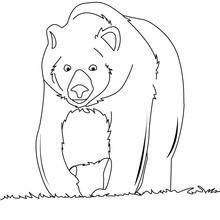 Desenho de um grande urso-pardo para colorir online