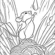 Ratinho, amigo do Bambi