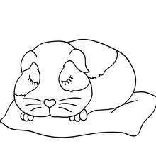 Desenho de um Porquinho-da-Índia dormindo para colorir