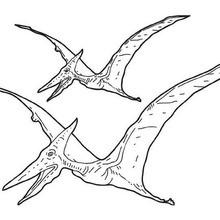 Desenho de um Pterossauro para colorir