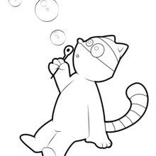 Raccoon que faz bolhas