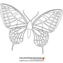 Colorir uma borboleta