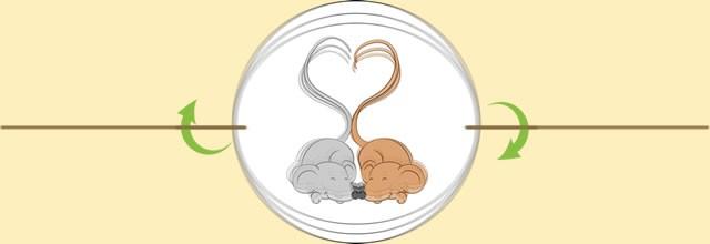 Mice coração cauda taumatrópio
